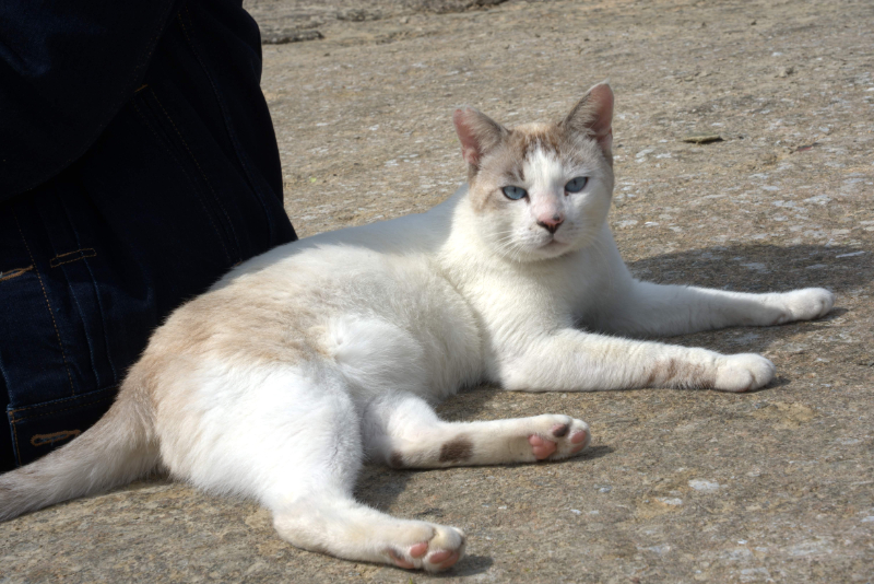 恩納村の猫